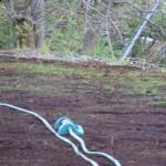 New Lawn by Barn Progress Report