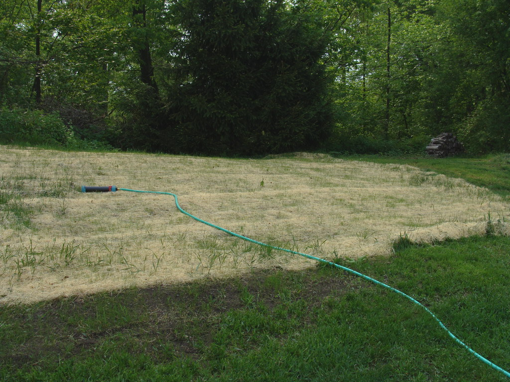 Back yard grass growing in filled areas