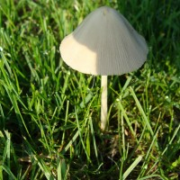 There are Mushrooms Everywhere in the New Lawn